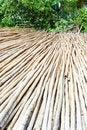 Free Bamboo Royalty Free Stock Photos - 33915198
