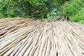 Free Bamboo Royalty Free Stock Photography - 33915247