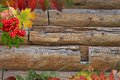 Free Autumn Background Royalty Free Stock Photography - 33915537