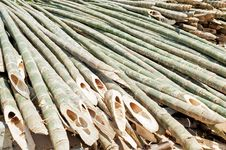Free Bamboo Royalty Free Stock Photo - 33914915