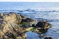 Free Rocky Sea Coast With Seaweed Royalty Free Stock Photos - 33940768