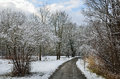 Free Winter Park Covered With Light Wet Snow Royalty Free Stock Photo - 33946935