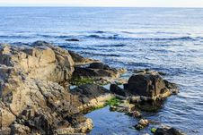 Free Rocky Sea Coast With Seaweed Royalty Free Stock Photos - 33940768