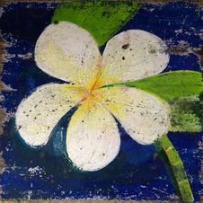 Free Old Paint Of Plumeria Flower Stock Photos - 33944103