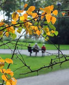 Free Elderly People In Autumn Park Royalty Free Stock Photo - 33946205