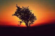 Free Tree Sunset Royalty Free Stock Photography - 33949087