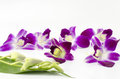 Free Beautiful Orchid Stock Photos - 33951433
