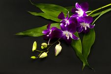 Free Beautiful Orchid Stock Photos - 33950753