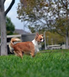 Free Dog At Attention Stock Photography - 33957542