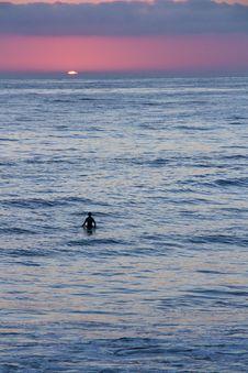 Beach Sunset Silhouette Stock Photo