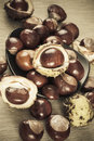 Free Chestnuts Brown Colorized Picture Stock Photography - 33965692