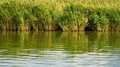 Free Reed Reflects In A Lake Stock Photos - 33970273
