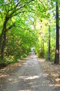 Free Forest Road Stock Photography - 33988822
