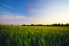Free Green Field Stock Photography - 33987402