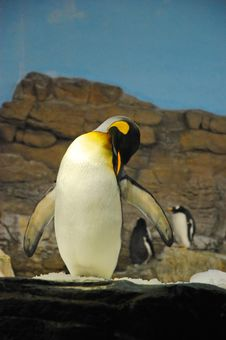 Free Penguin Habitat Stock Image - 33989261