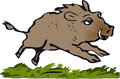Free Wild Boar Stock Photo - 33998810