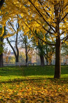 Free Yellowed Leaves Fell From The Tree On The Green Grass In Autumn Stock Photography - 33996342