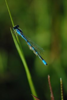 Free Blue Dragonfly Royalty Free Stock Photo - 340085