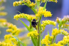Free Humblebee On Flower Stock Photo - 340140