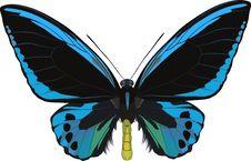 Free Ornithoptera Ulvilliana Royalty Free Stock Image - 340736