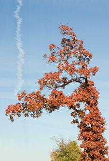 Free Tree Stock Image - 341681