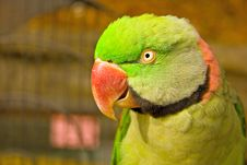Free Parrot Stock Photo - 341690