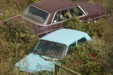 Free Overgrown Cars Royalty Free Stock Photos - 342408
