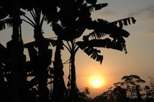 Free Tropical Sunset Stock Photos - 342603