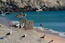 Free Seagulls In Flight Stock Photo - 343840