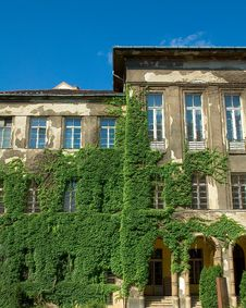 Old Building With Vines Stock Photos