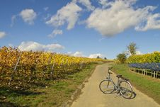 Free Bicycle In Wineyards Stock Image - 344731