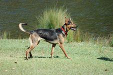 Free German Shepherd Royalty Free Stock Images - 347349