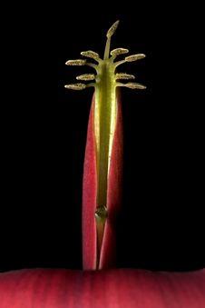 Free Flower Petals Macro Stock Images - 347504