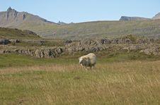 Free Iceland Royalty Free Stock Image - 348766