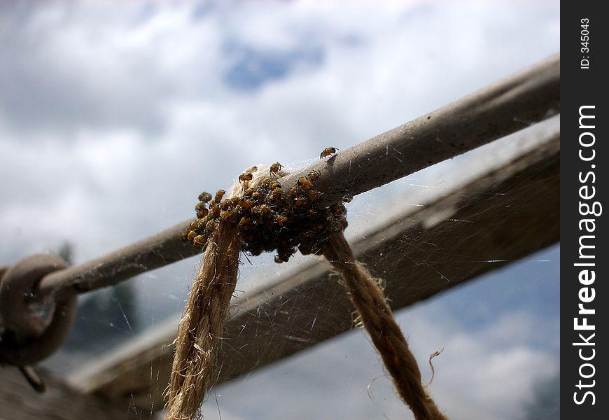Tiny Spiders    2