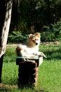 Free Dog Resting Royalty Free Stock Image - 3403726