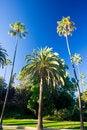 Free California Palm Trees Stock Photography - 3406552