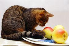 Free Cat Royalty Free Stock Photo - 3400185