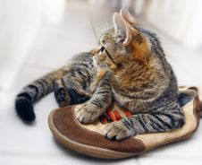 Free Cat Stock Images - 3400214