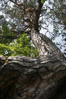 Free Tree Stock Image - 3400641