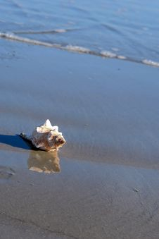 Free Conch Shell At Shore Poster Stock Images - 3400664