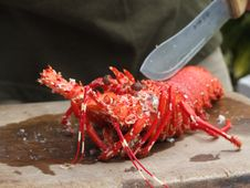 Free Lobster, Homar Stock Photo - 3400980