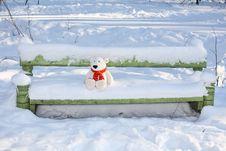 Teddy Bear On The Bench Stock Photography