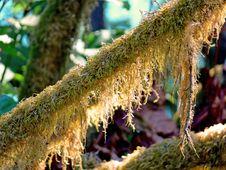 Free Mossy Limb Stock Photos - 3401933