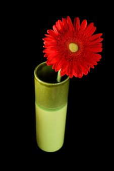 Free Red Daisy In Green Vase Stock Photography - 3402462