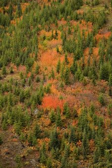 Free Fall Colors Stock Photography - 3402742