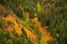 Free Fall Colors Royalty Free Stock Image - 3402966