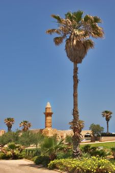 Free Palm Trees And Towers. Royalty Free Stock Photography - 3403687