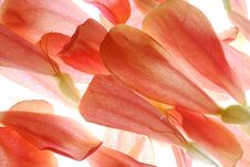 Free Petals Stock Images - 3403734
