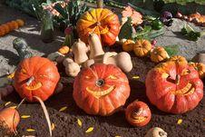 Free Carnival Of Pumpkins Stock Photo - 3403900